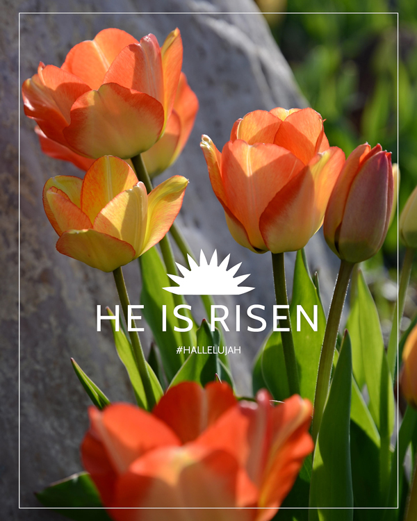 #hallelujah He Is Risen Posters. FREE download! 8x10, 5x7 and 4x6-inch files. JPEG, PDF and web versions included!